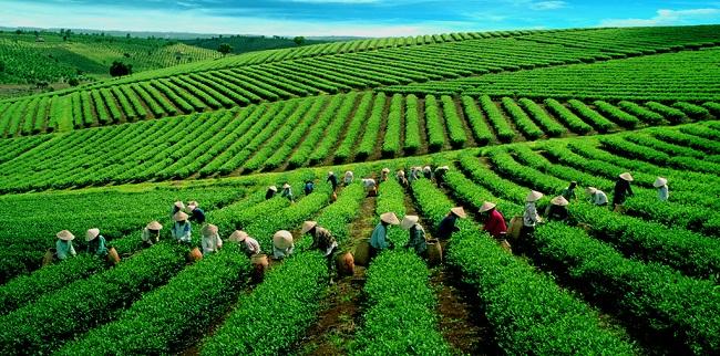 le-the-vert-au-vietnam
