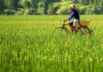 sejour-vietnam-Madame-F-BARRERA