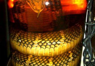 alcool-de-serpent
