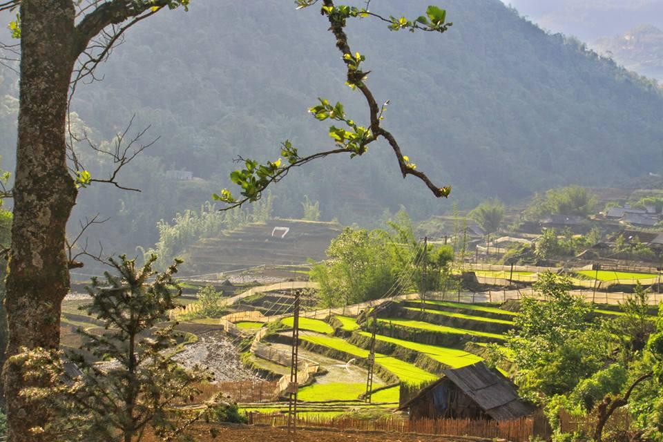 belle-riziere-en-terrasse
