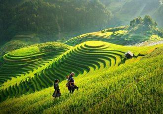 riz vietnam 2