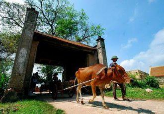village-de-duong-lam-au-vietnam