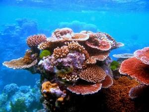 beaute-des-corails-dans-le-fond-de-la-mer-a-catba