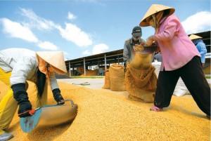 delta-du-mekong-grenier-a-riz-du-vietnam