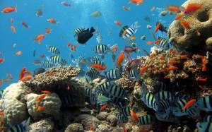 des-poissons-colorees-a-nhatrang