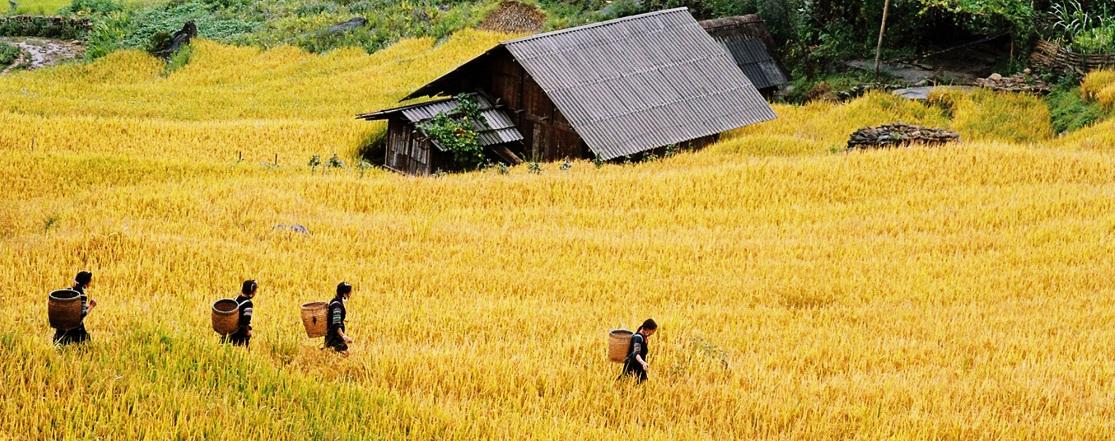 ethnies-du-vietnam