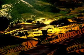 rizieres-sapa