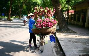 saison-des-fleurs-a-hanoi