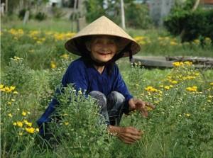souris-des-paysants-vietnamiens