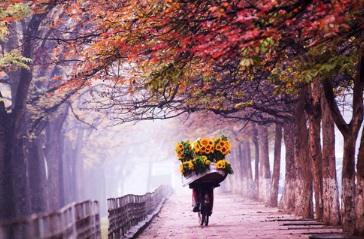 vendeuse-fleurs-hanoi