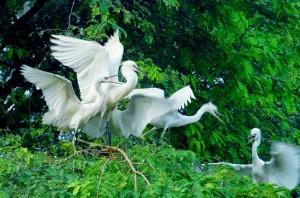 zone-ecologique-au-delta-du-mekong