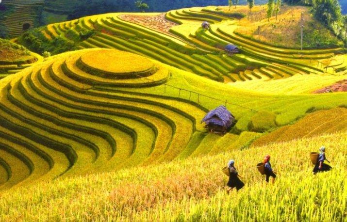 Beaux-paysages-nord-vietnam