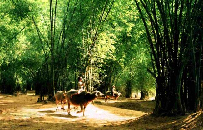 haie-de-bambou-vietnam