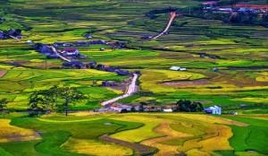 belle-riziere-du-vietnam
