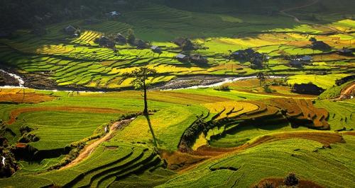 belle-riziere-nord-du-vietnam