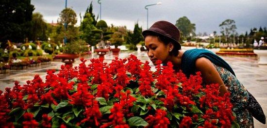 fleurs-dalat