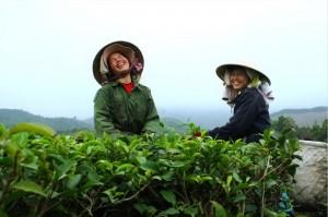 photo-the-vert-vietnam