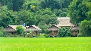champs-de-riz-saigon