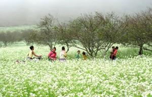 champs-des-fleurs
