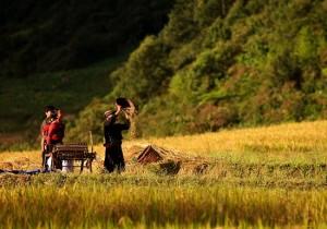paysants-dans-le-champs-sapa
