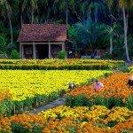 champs-de-fleurs-ben-tre-vietnam-photos