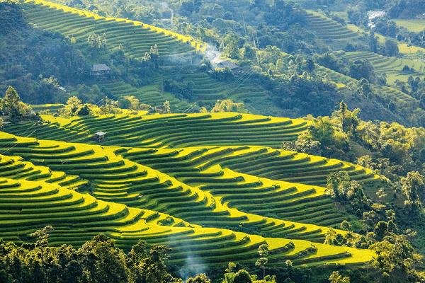 hoang-su-phi-riziere-en-terrasse-vietnam