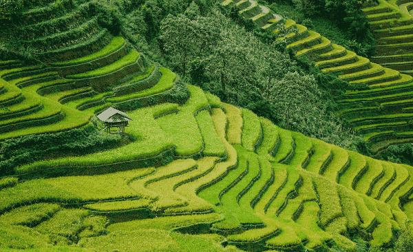 sapa-riziere-en-terrasse-vietnam