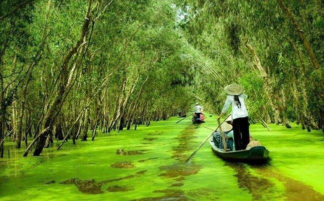 foret de tra su - delta du mekong - vietnam