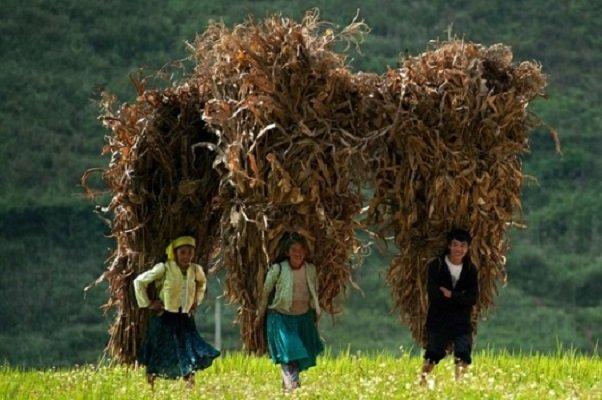 photo-circuit-vietnam-tel-qu-il-est