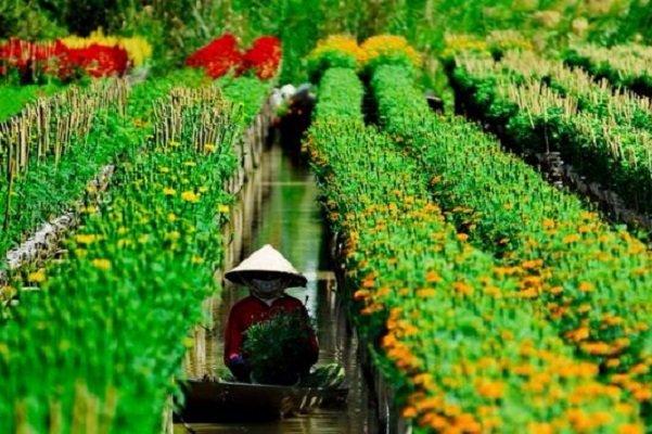 sa-dec-region-des-fleurs-sud-vietnam