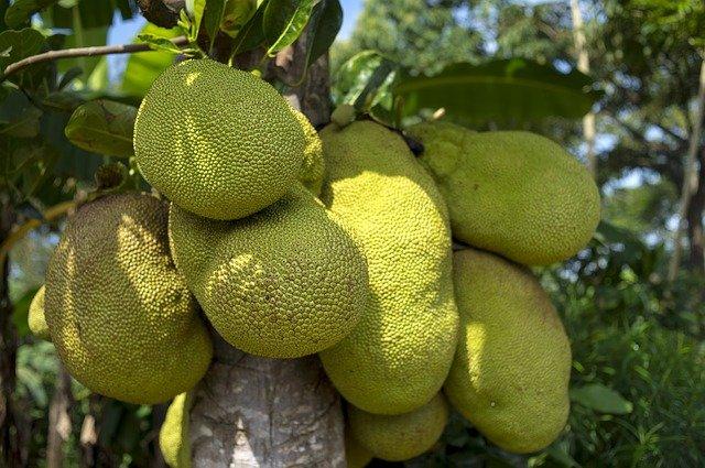 fruit-du-jacquier-vietnam